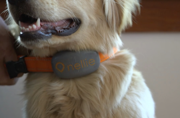 Where's Nellie? This GPS locator mixes radios to pinpoint your pooch