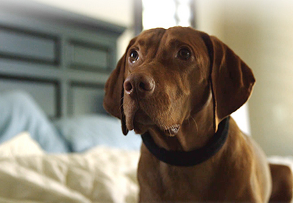 Smart Connected Collar keeps Fido in line, trains and teaches pooches