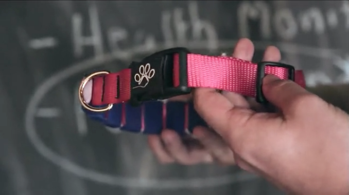 Chord Collar cuts cords and leashes to keep furry ones healthy and safe