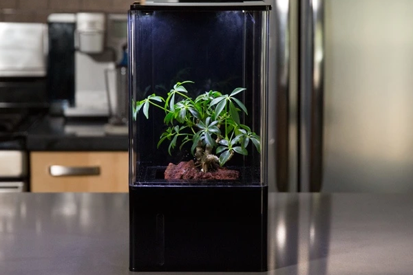 EcoQube Air desktop greenhouse clears the air while growing your plants